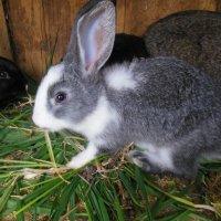 кролик :: игорь