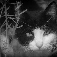 Весенний Кот :: Дмитрий Барабанщиков
