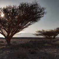 Dead Sea Landskape :: Евгений Мельников