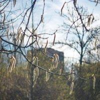 Признаки весны :: Виталий