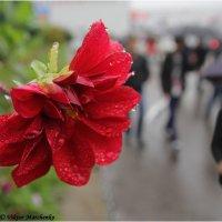 Дождь в городе :: Виктор Марченко