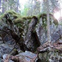 И на камнях растут деревья :: Елена Якушина