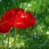 Весенние цветы 2 :: Natali