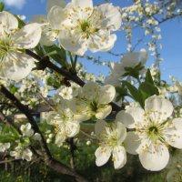 Весна :: Елена Милая