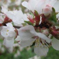 Весна :: Valentina