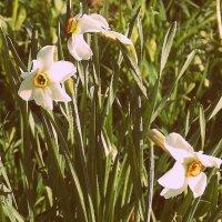 ....... :: Фотогруппа Весна.