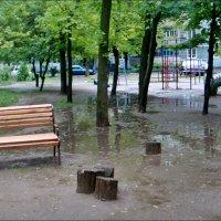 Мокрые пенёчки :: Нина Корешкова