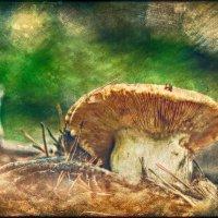 я семь недель не брился, восемь суток ел грибы :: Алексей Карташев