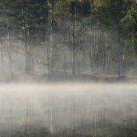 Про туманное утро.... :: Юрий Цыплятников