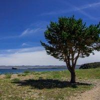 дерево на косе :: Константин Шабалин
