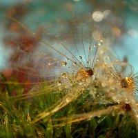 Дождинки семена ко мху пришвартовали :: Татьяна Кадочникова