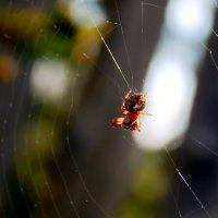 Вселенная паука :: Татьяна Н.