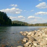 Берег реки Бия, Республика Алтай :: Елена Бушуева