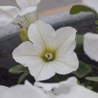 Flower_67 :: Trage