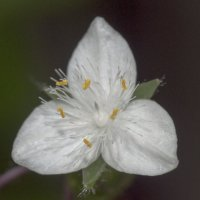 Flower_65 :: Trage