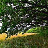 В тени деревьев :: Виктор Шандыбин