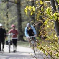 Весна :: Vladimir Arbesman