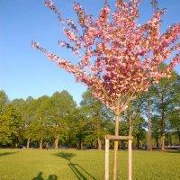 Весна :: Teresa Valaine