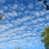 Небо тысячей глаз сверху смотрит на нас.... :: Светлана