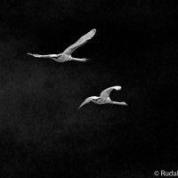 Не стреляйте белых лебедей :: Сергей