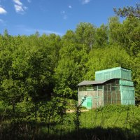 Голубятня в лесу :: Андрей Лукьянов