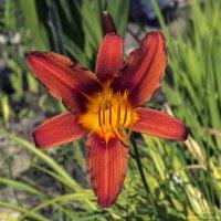 Цветы Ботанического сада :: Valeriy Piterskiy