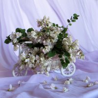 Белая акация в саду :: Наталья Джикидзе (Берёзина)