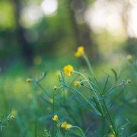 Первые весенние цветочки.. :: Дина Нестерова