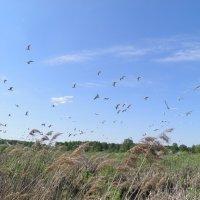 Чайки над болотом :: Константин Ординарцев