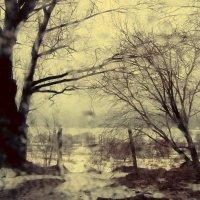 весение дожди :: Maksim Telegin