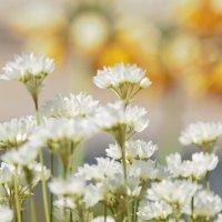 цветы-источник вдохновенья... :: Надежда Зареченская
