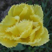 Цветок :: Евгений В