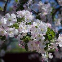 Подмосковная весна :: Игорь Ястребов