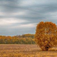 Одинокое дерево :: Сергей Крылов