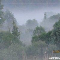 Туман :: Polina Pavliuk