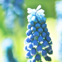 Май в голубом :: ulya1727 ВК