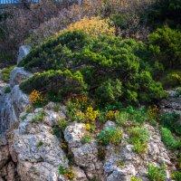 И на камнях растут деревья :: Мария Дронова