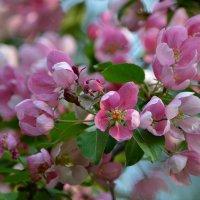Несколько дней вечной весны... :: Ольга Русанова (olg-rusanowa2010)