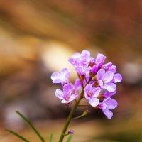 Скромные весенние цветы :: Анатолий Иргл