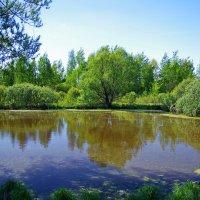 Придорожный пруд. :: Ирина Нафаня