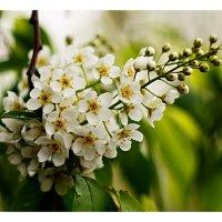 Весенний цвет :: Виталий Томский