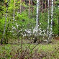 Весенний пейзаж :: Александр Садовский