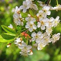 Снова весна! :: Константин