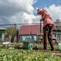 Снова зёрнышко в тёплую землю зароем :: Ирина Данилова