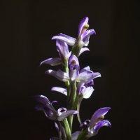 Цветы. :: Береславская Елена