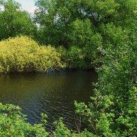 Бесчувственна холодная вода... :: Лесо-Вед (Баранов)