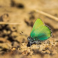 Первая бабочка :: Владимир Бобришев