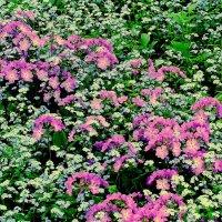 майские цветочные поляны 1 :: Александр Прокудин