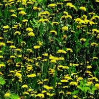 майские цветочные поляны 3 :: Александр Прокудин