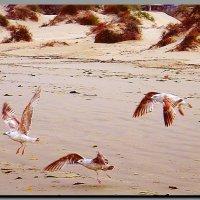 танцуют все !  чайки.  песчаный пляж. :: Ivana